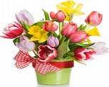 flowers-gardening-tips