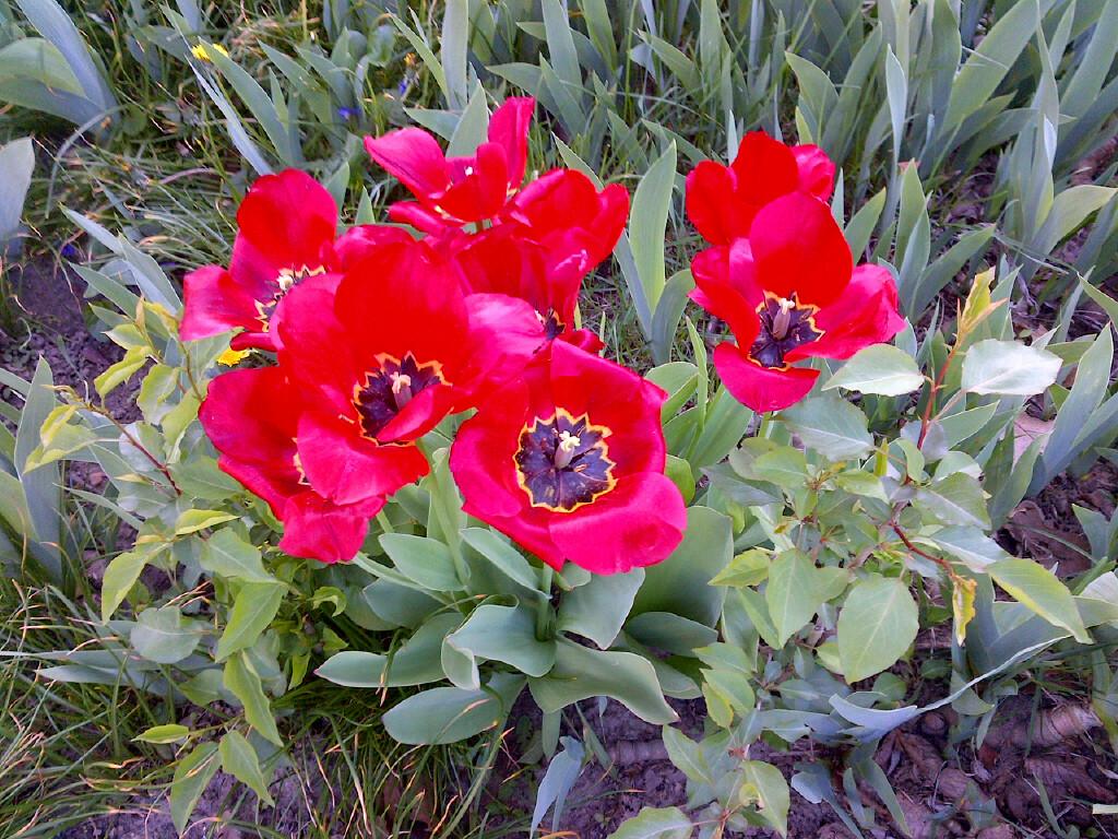 springtime-flowers-2016_1