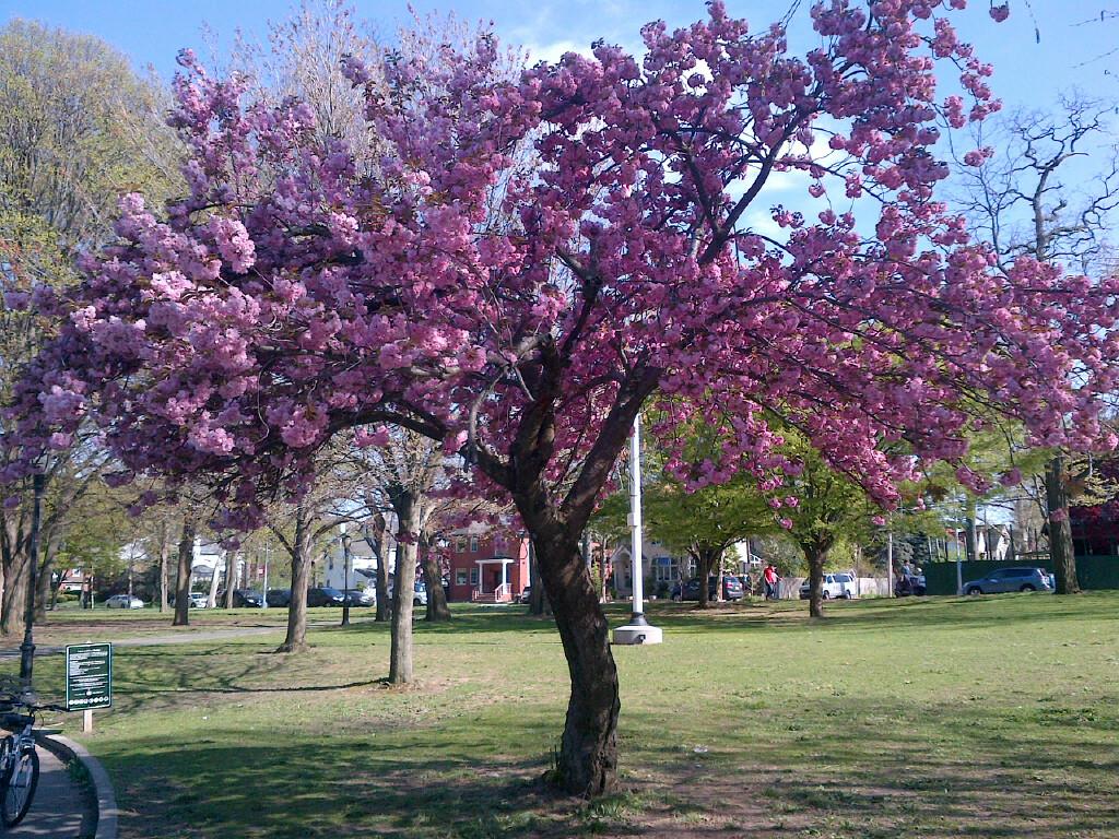 springtime-flowers-2016_2